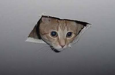 cat, animals, ceiling, attic, hole, peeking